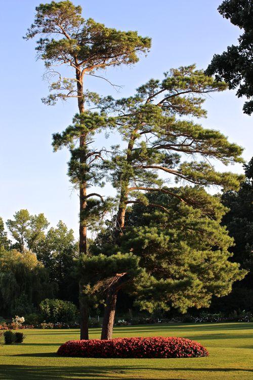 pines3.jpg