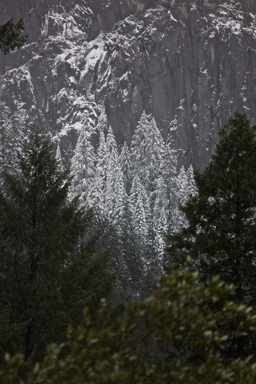 snowclustertrees.jpg